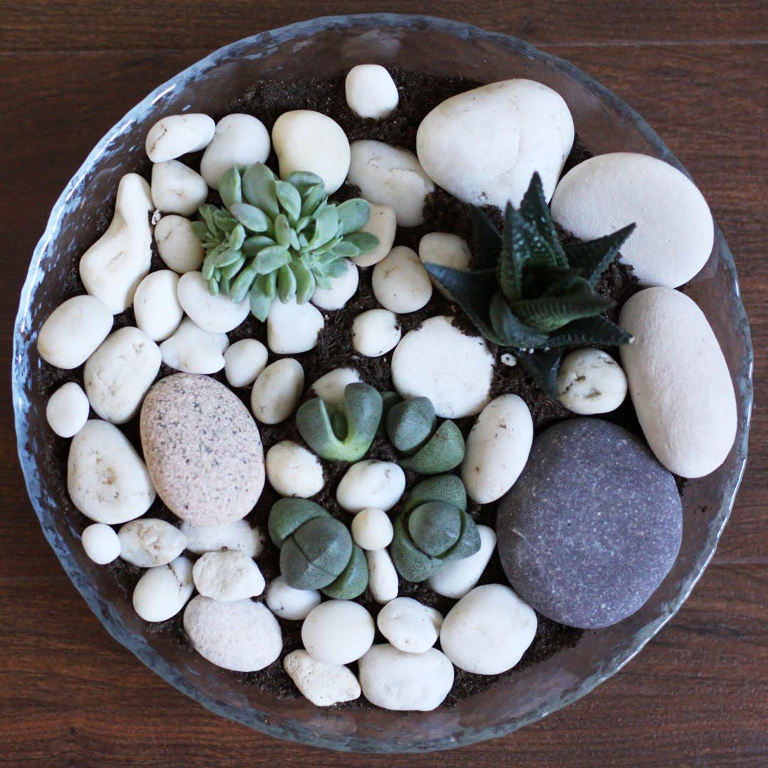 Декор суккулентов камнями