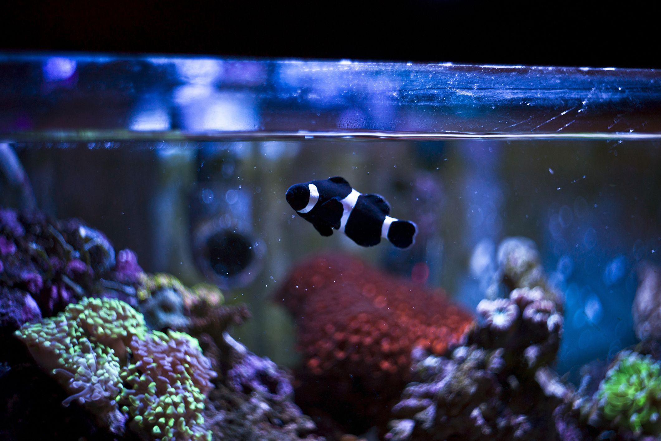 Декор для аквариума рыба клоун