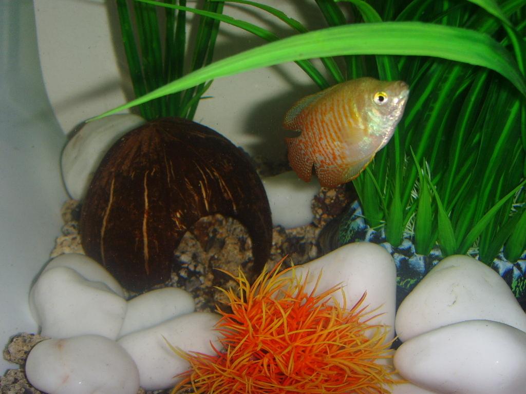 Декор для аквариума из кокоса