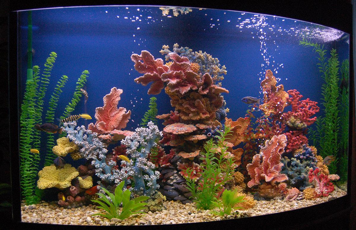 Декоративные кораллы для аквариума