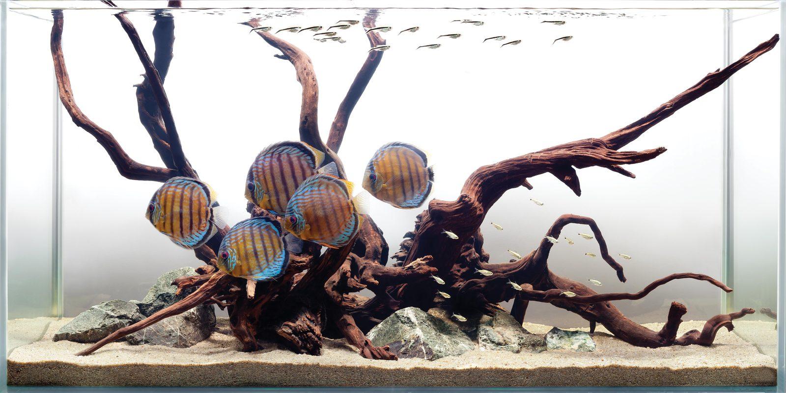 Декор для аквариума коричневый