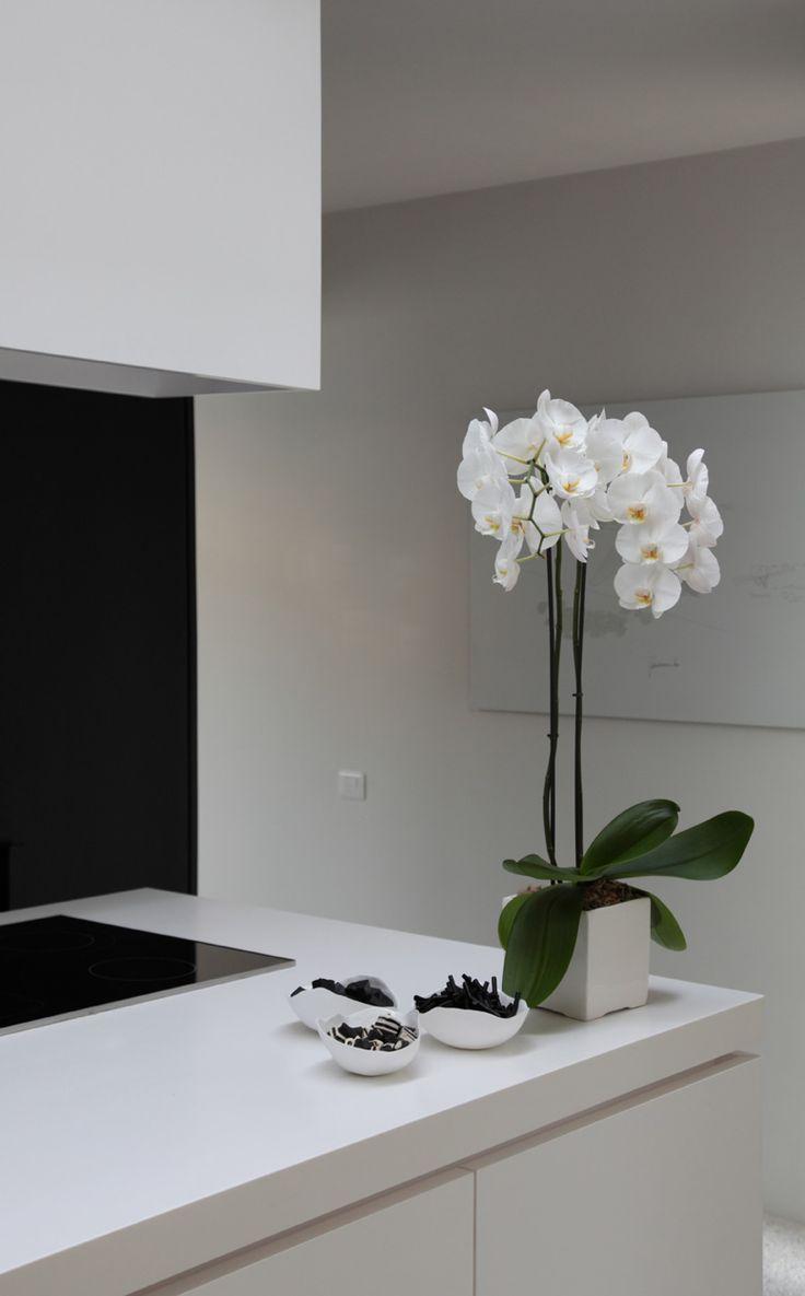 Орхидея Ванда в интерьере кухни