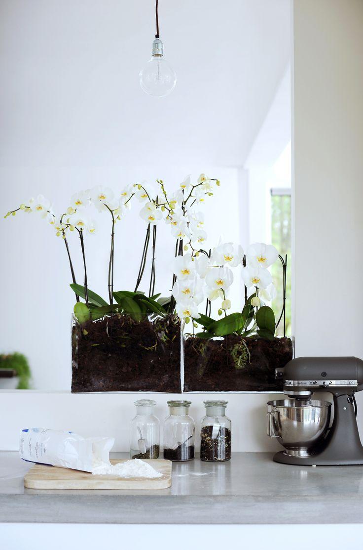 Фаленопсис на кухне