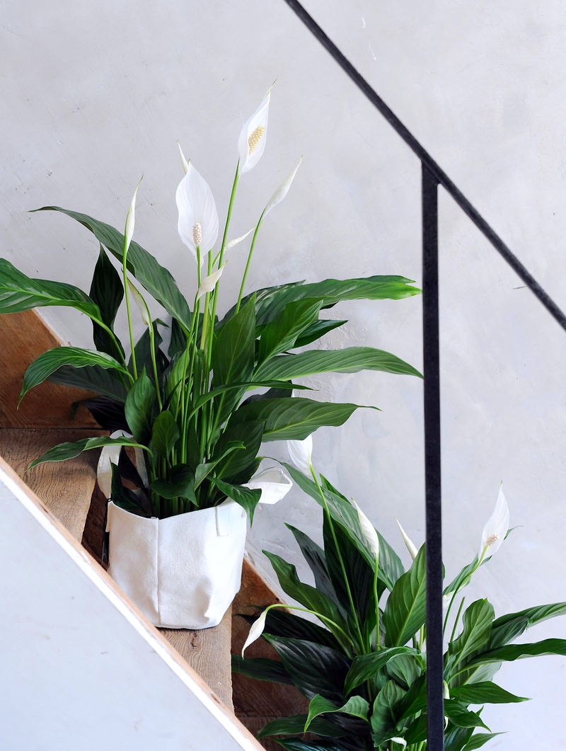 Спатифиллум в декоре лестницы