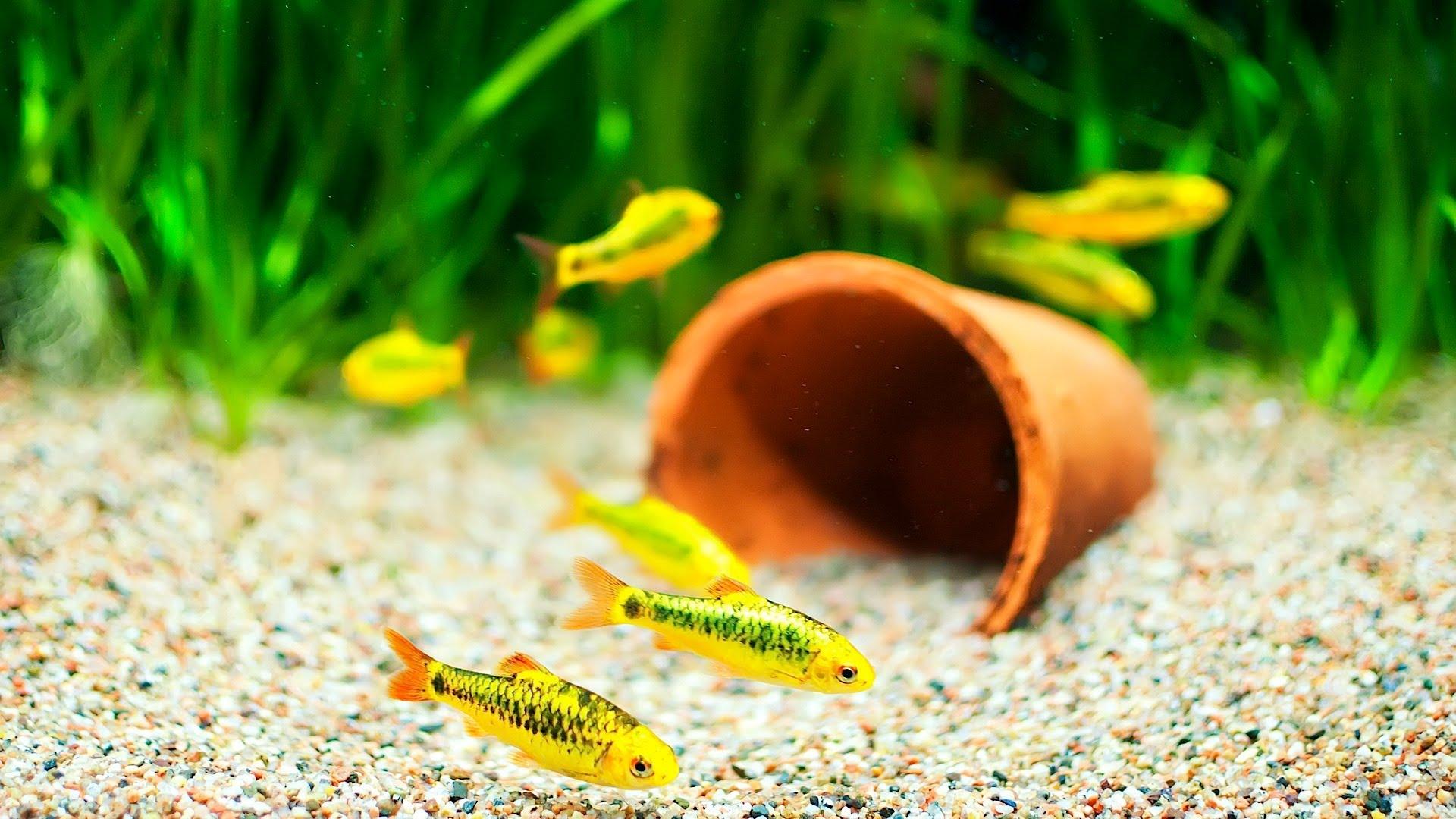 Декор для аквариума с мальками