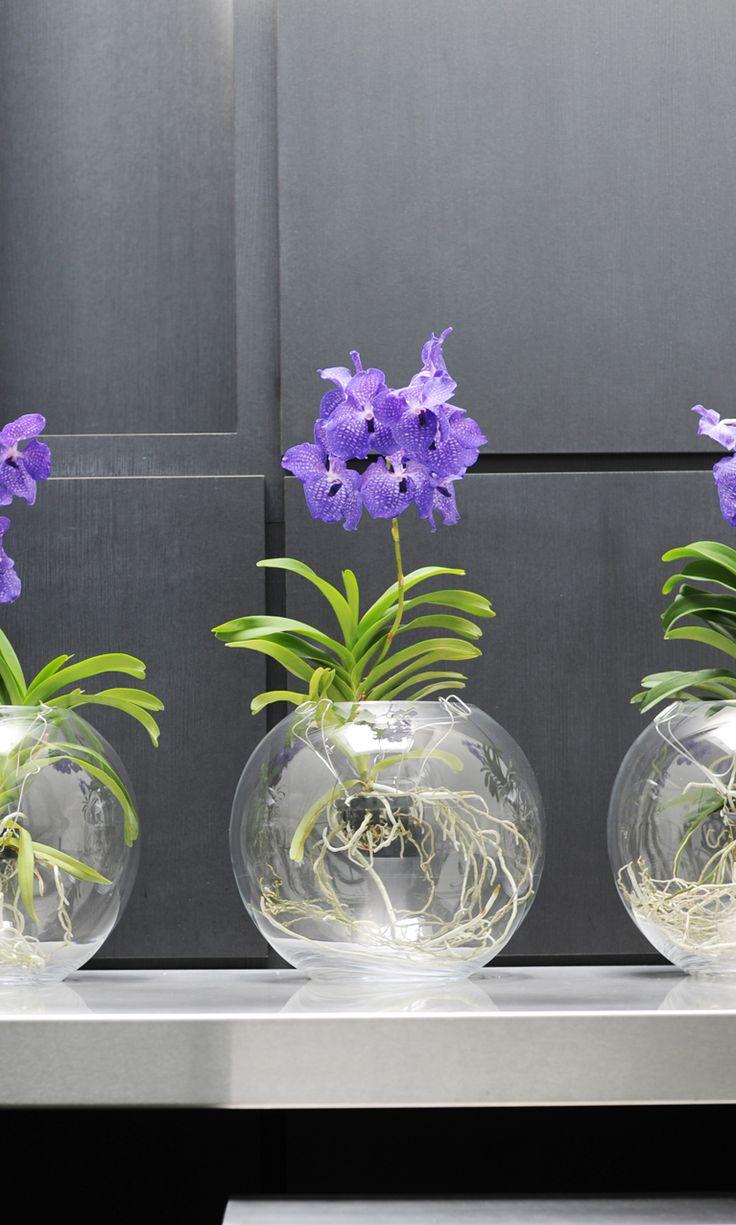 Орхидея Ванда в стиле модерн