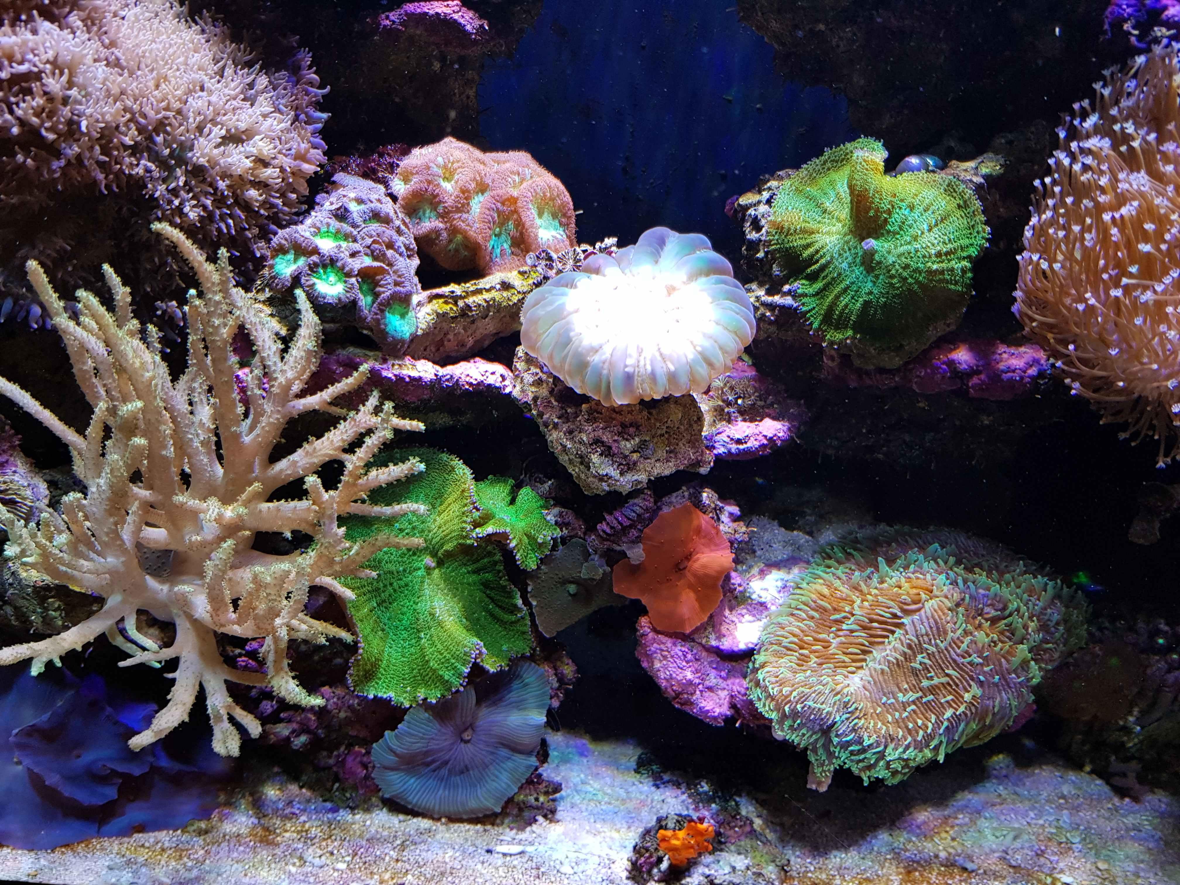Декор для аквариума натуральный