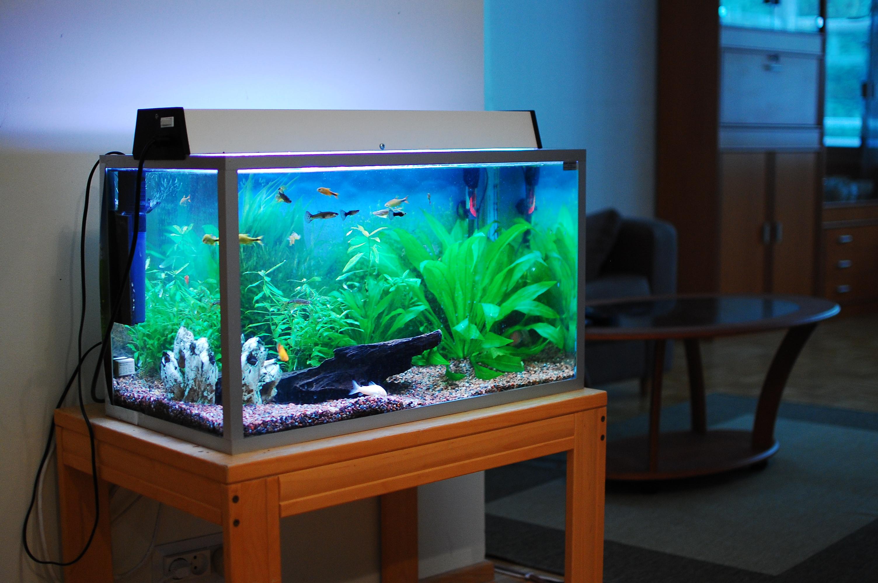 Декор для аквариума небольшого
