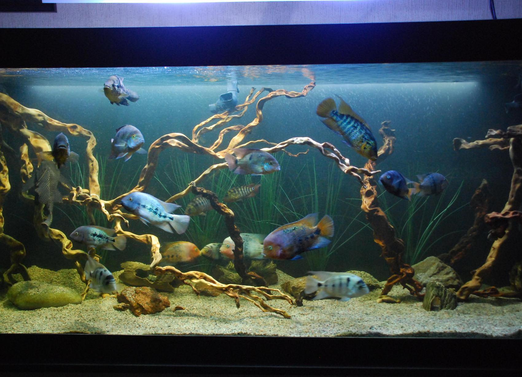 Декор для аквариума обустройство