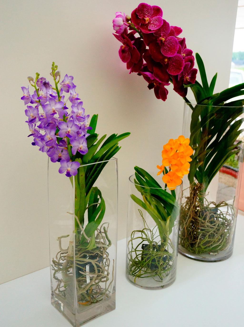 Пересадка орхидеи Ванды