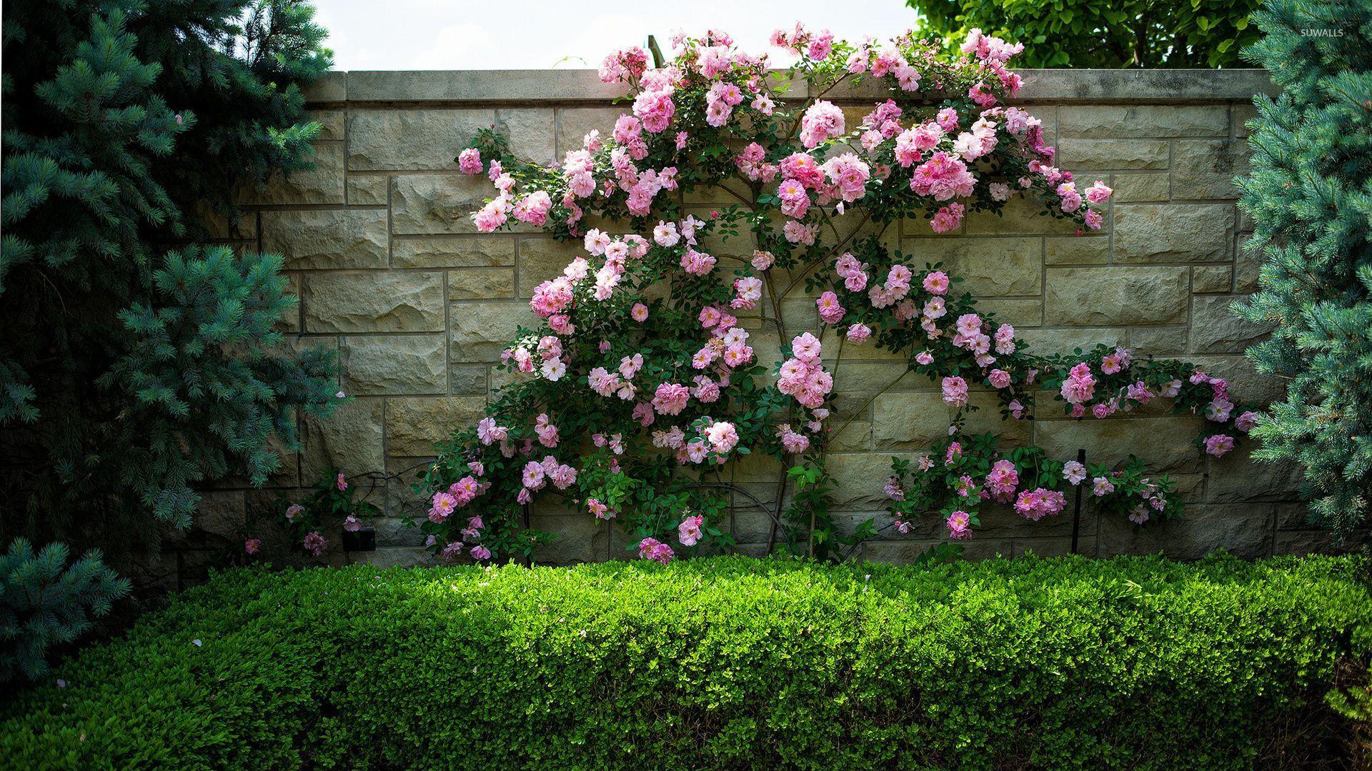 Забор из камня с цветами