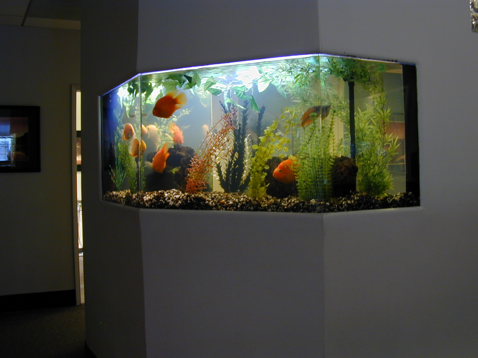 Декор для аквариума в прихожей