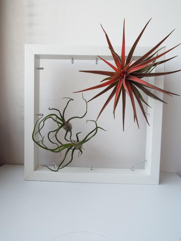 Декор рамки для фото растениями