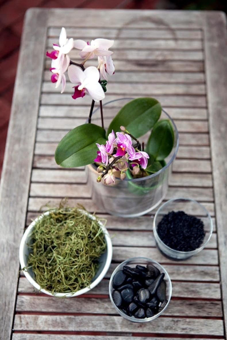 Орхидея Ванда в саду