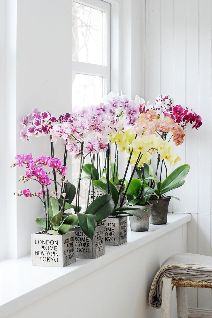 Орхидея Ванда в скандинавском интерьере