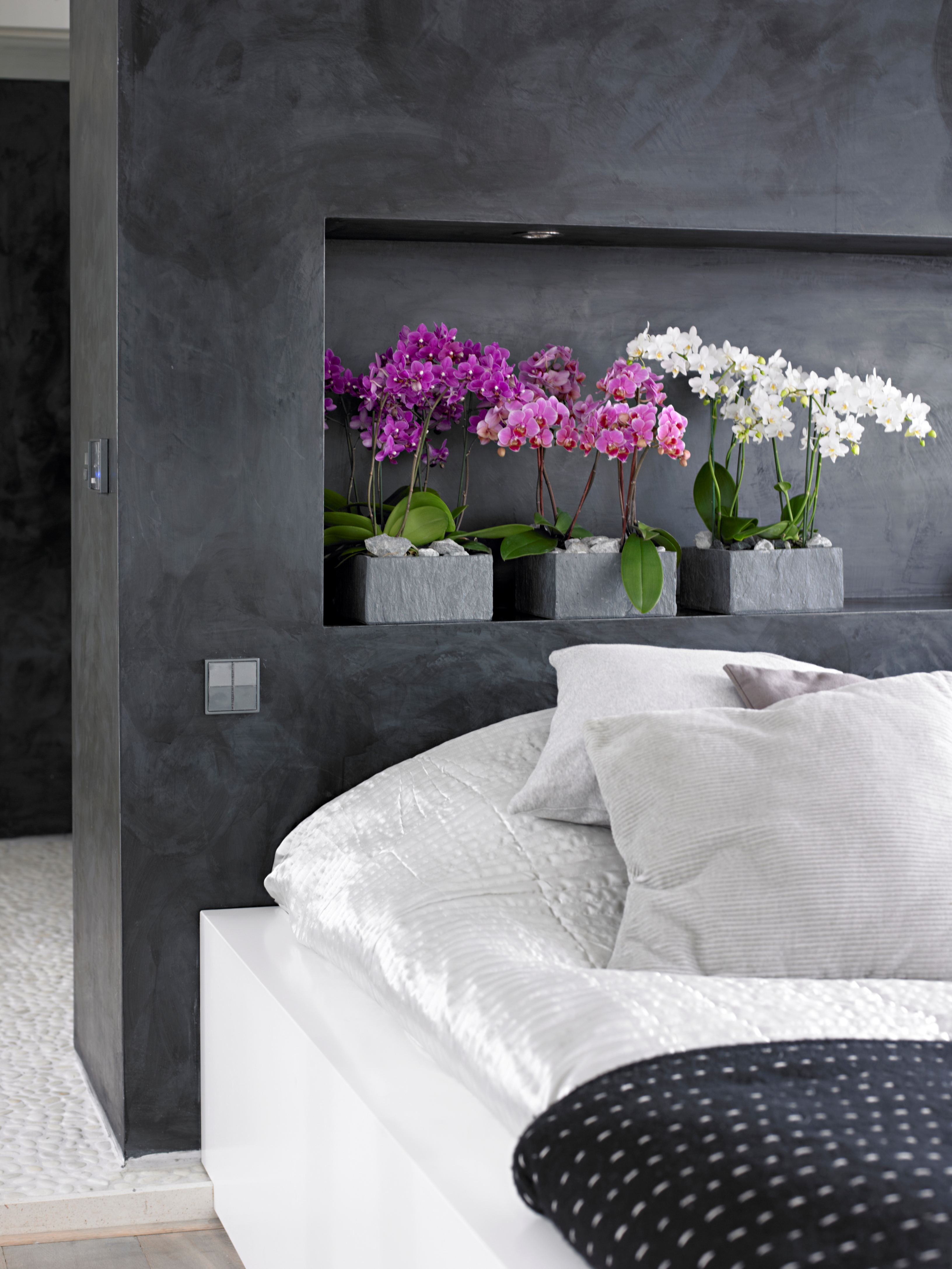 Фаленопсис в спальне
