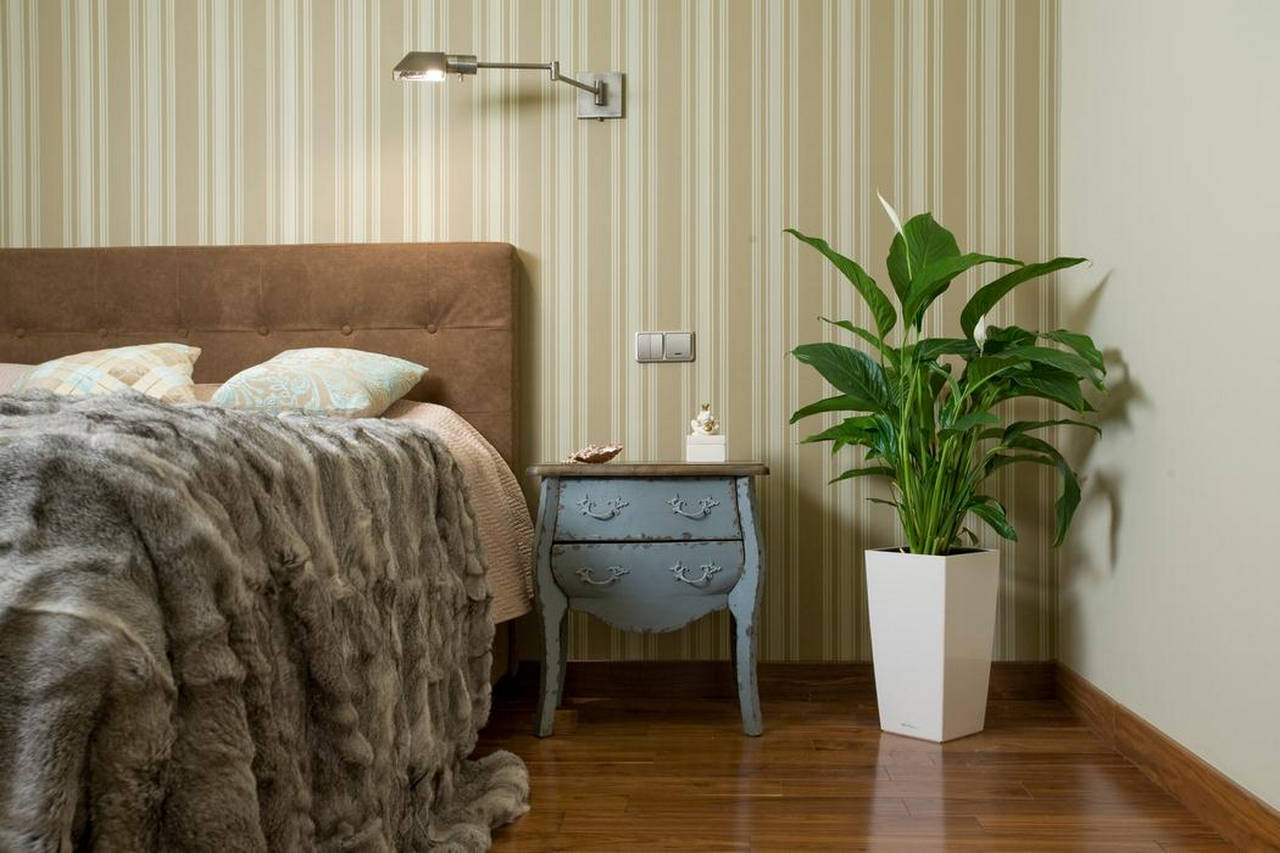 Спатифиллум в интерьере спальни
