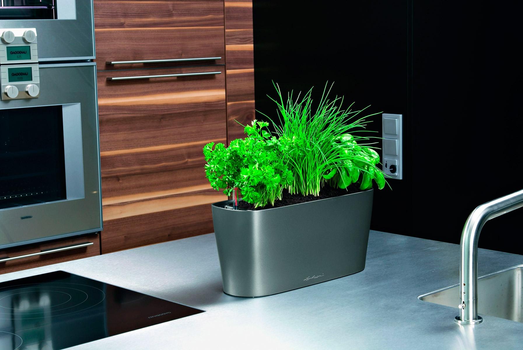 Зелень в интерьере кухни