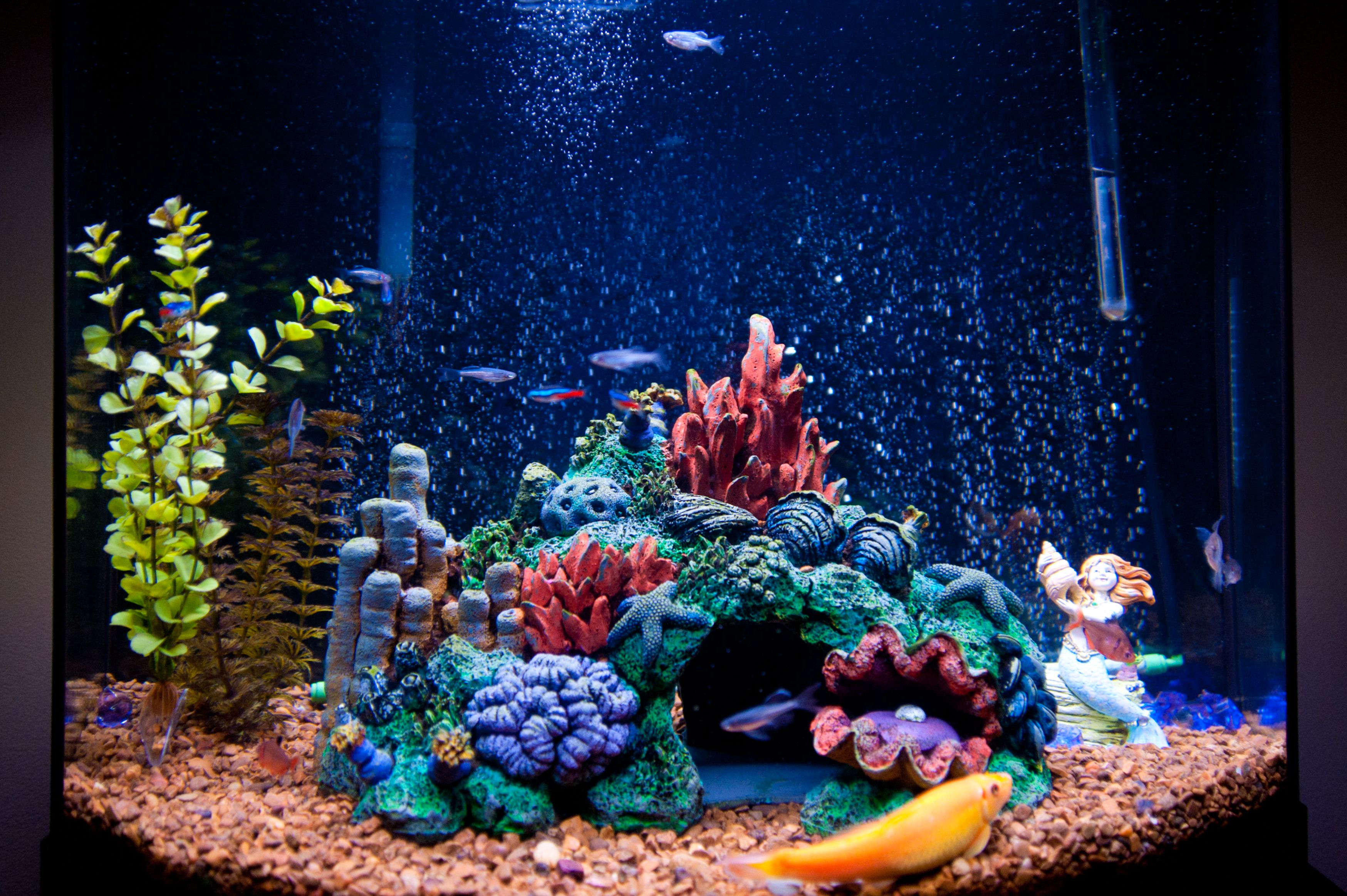 Декор для аквариума с морскими звездами