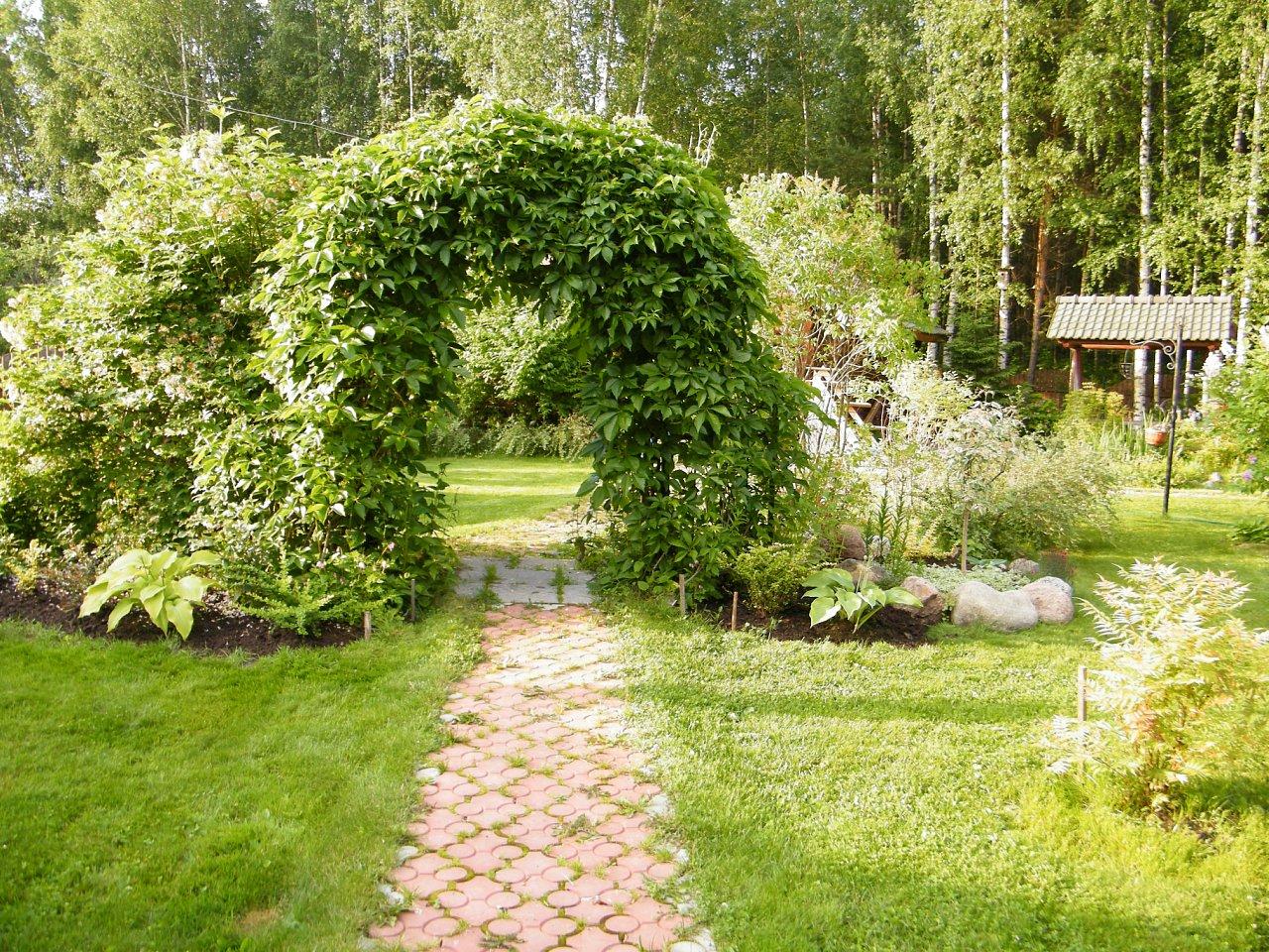 Арка из лианы в саду