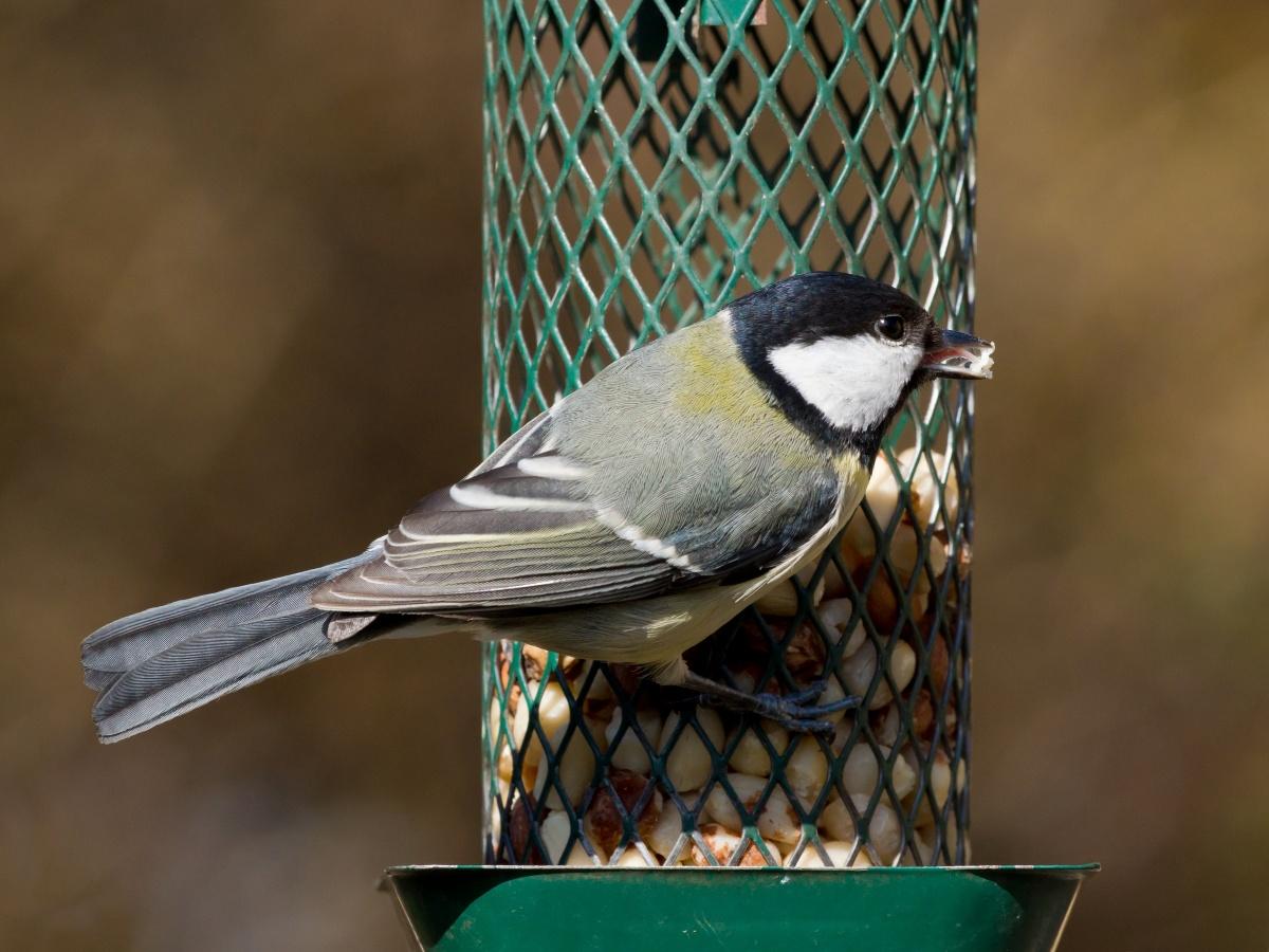 Кормушка для птиц цилиндрической формы