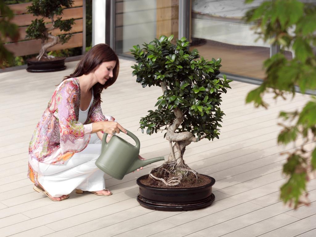 Полив домашнего дерева