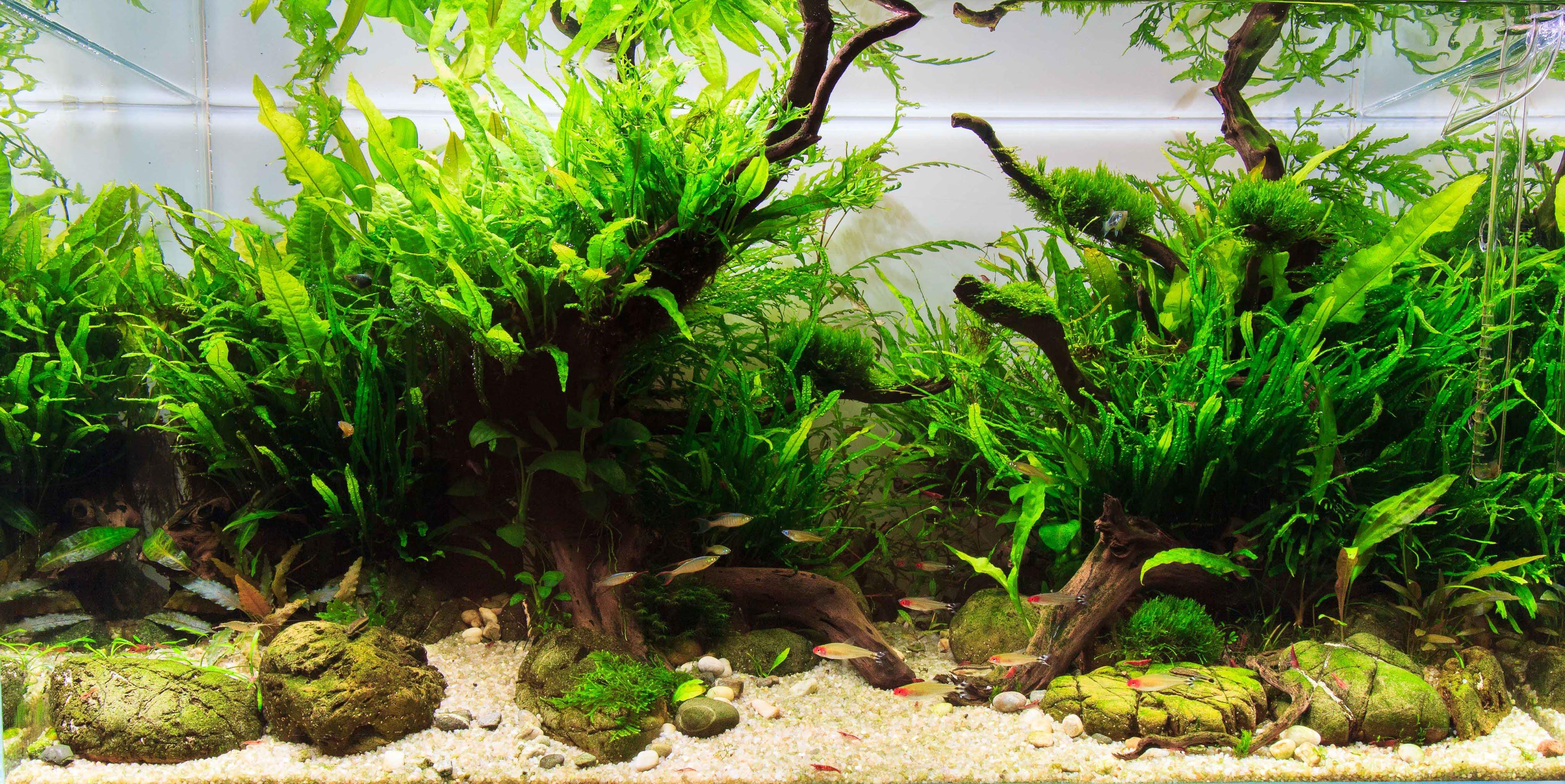 Деревья для аквариума
