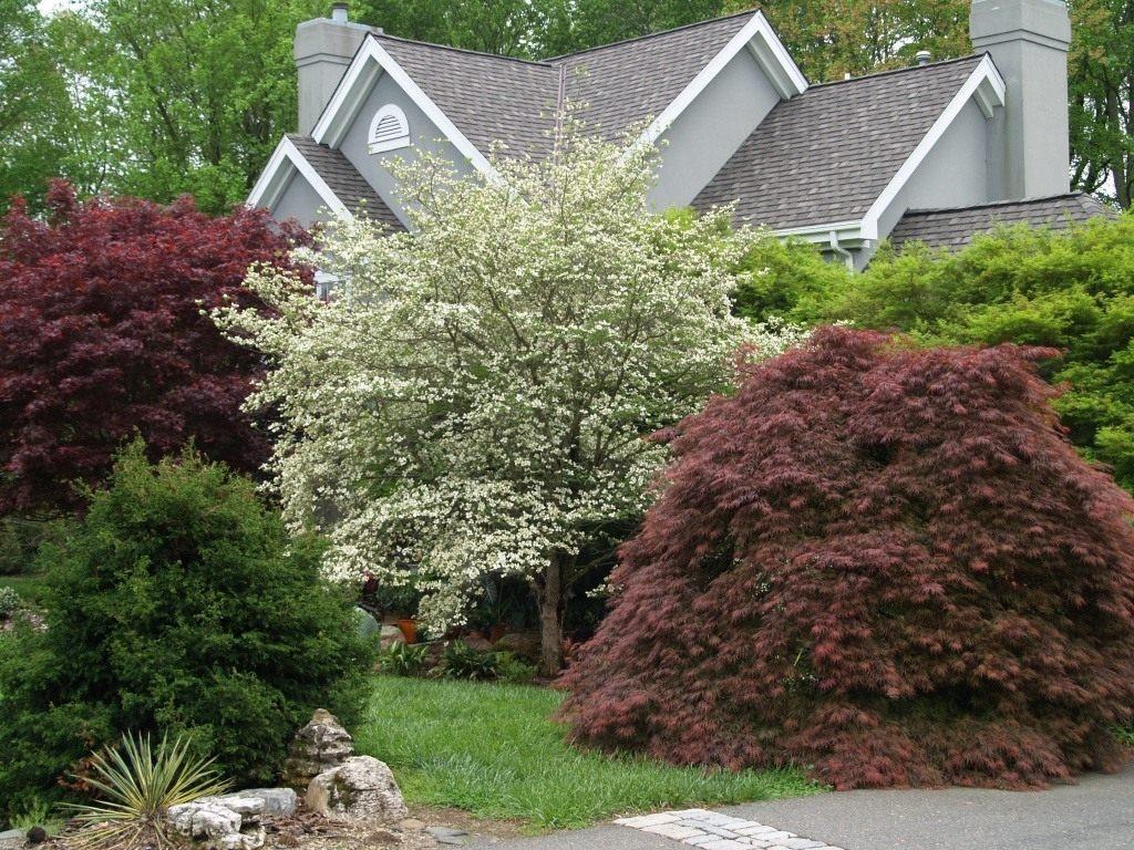 Дизайн сада с деревьями