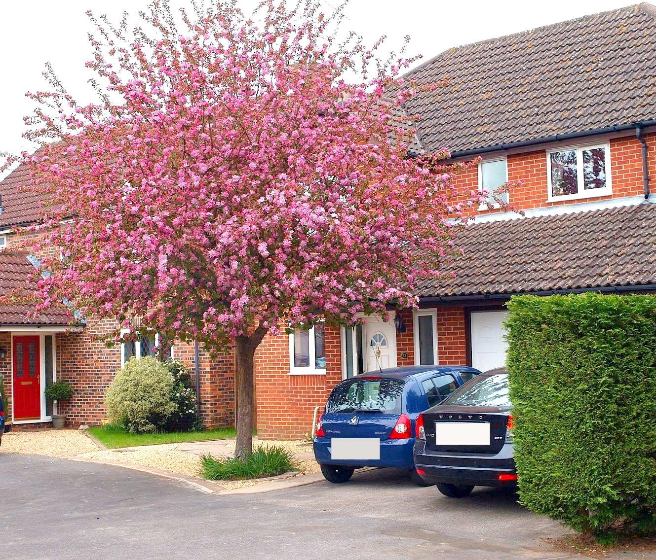 Цветущее дерево перед домом