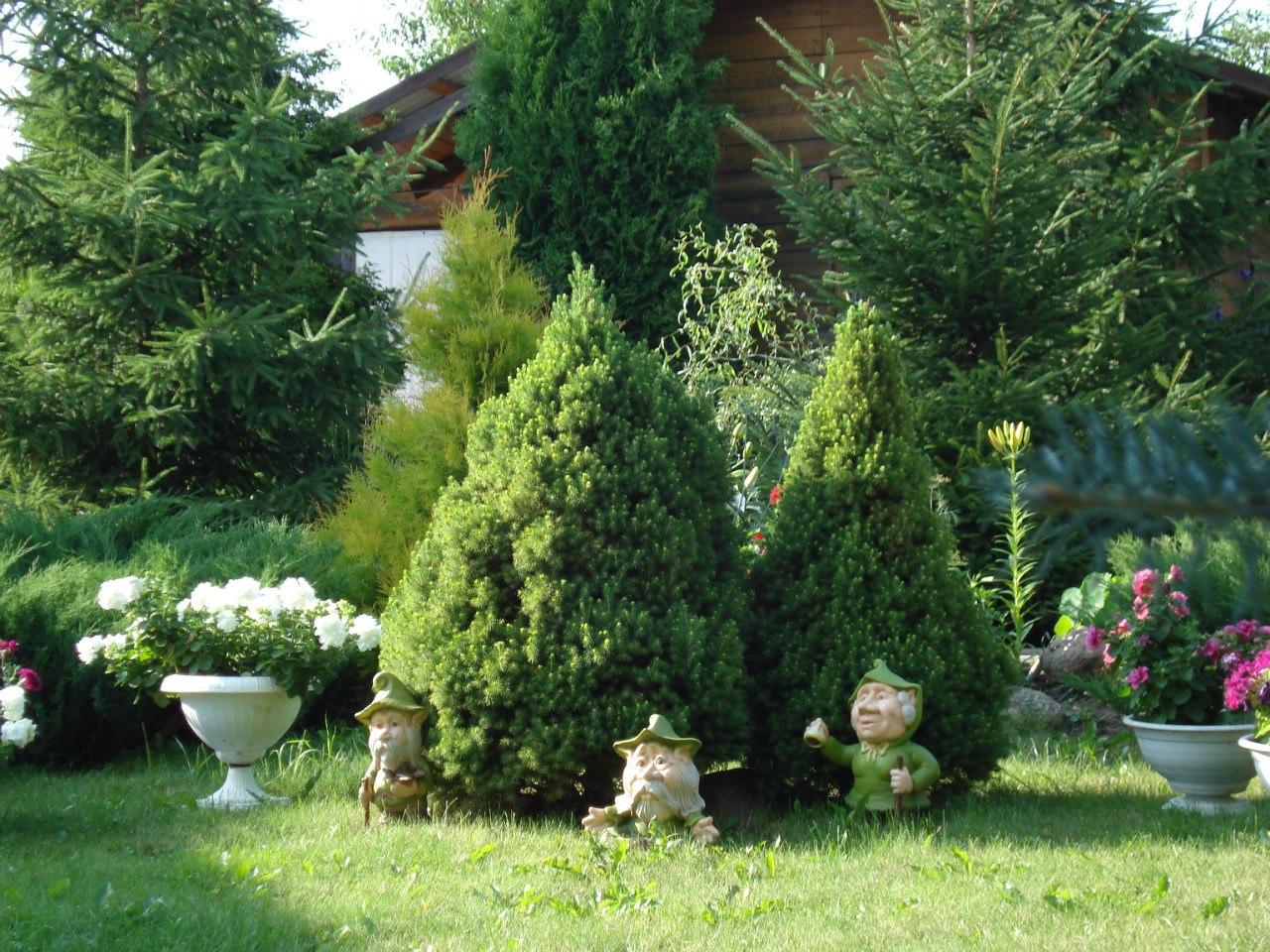Ели в саду