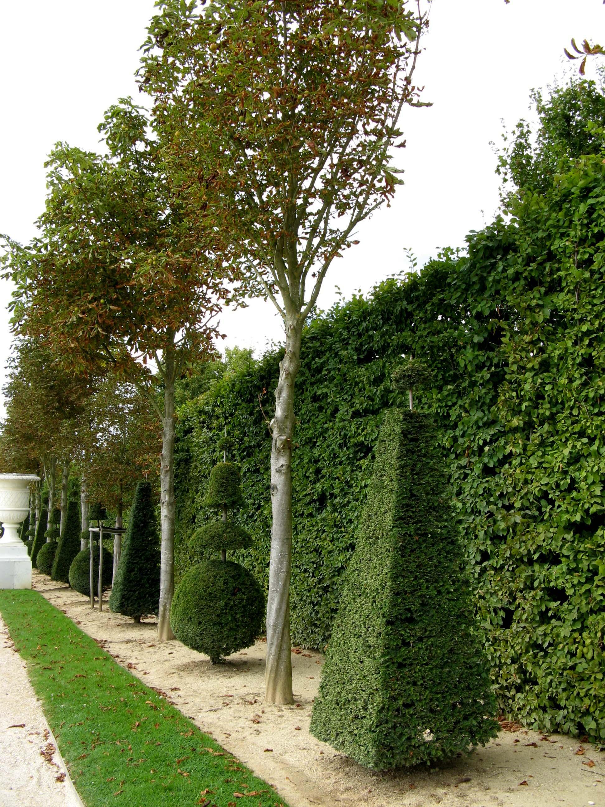 Формовые деревья в саду