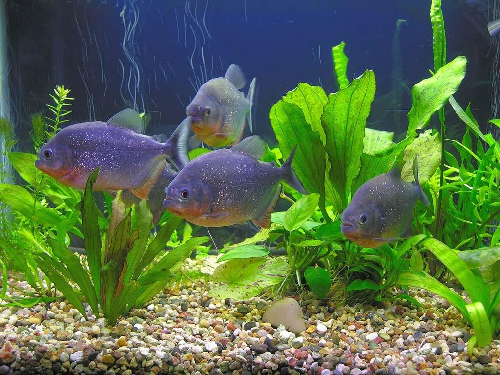 Грунтовые растения для аквариума