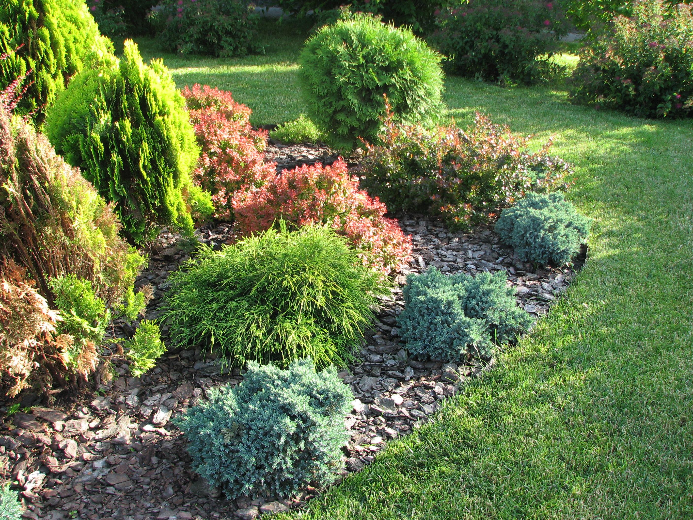 Миксбордер с хвойными растениями