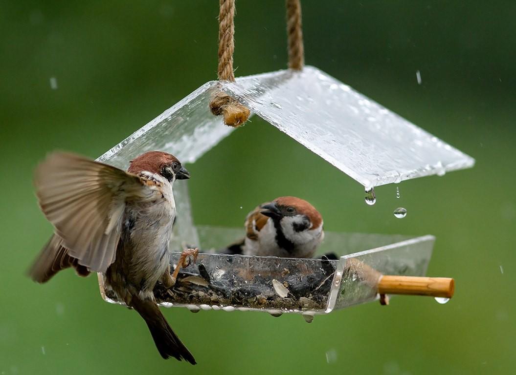 Кормушка для птиц с крышей