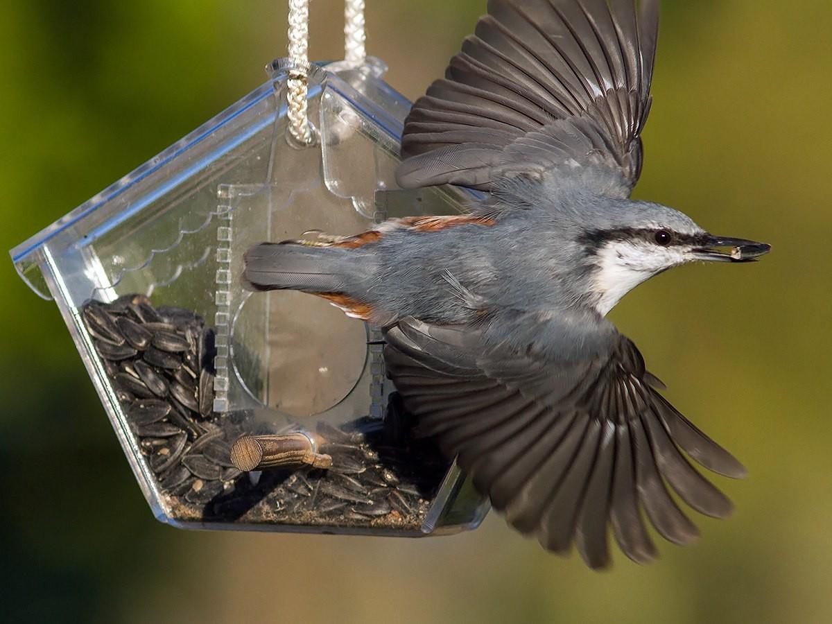 Кормушка для птиц из пластмассы