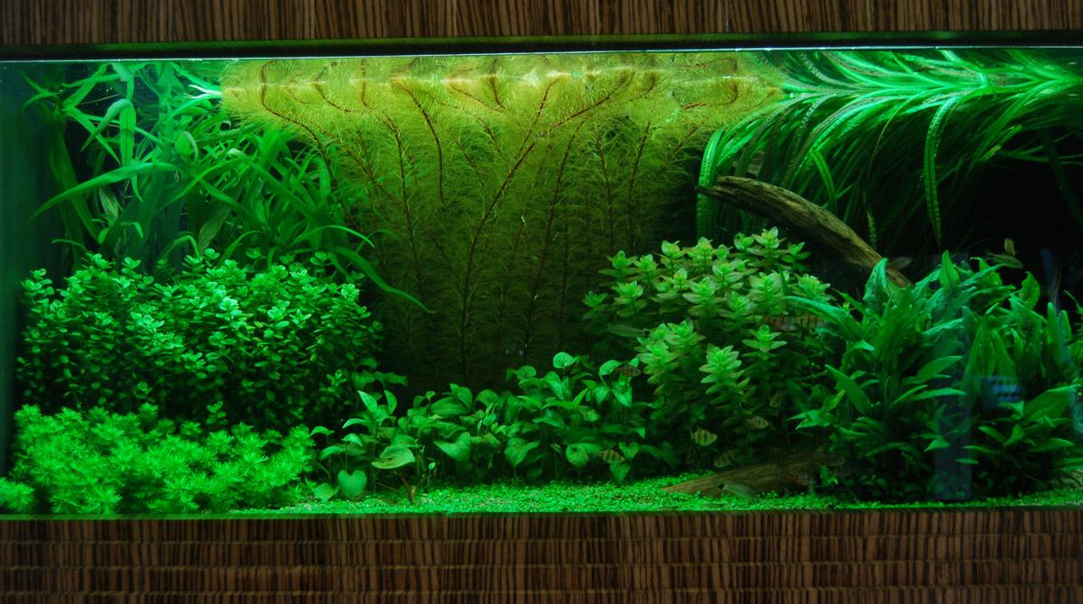 Почвенные растения для аквариума