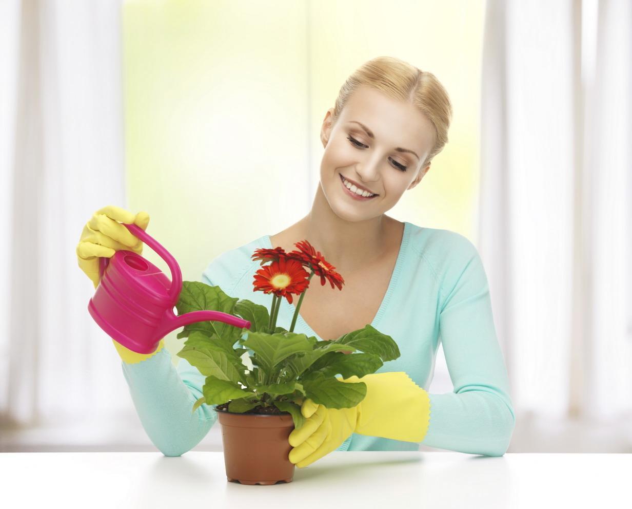 Полив комнатных цветов минерализированной водой