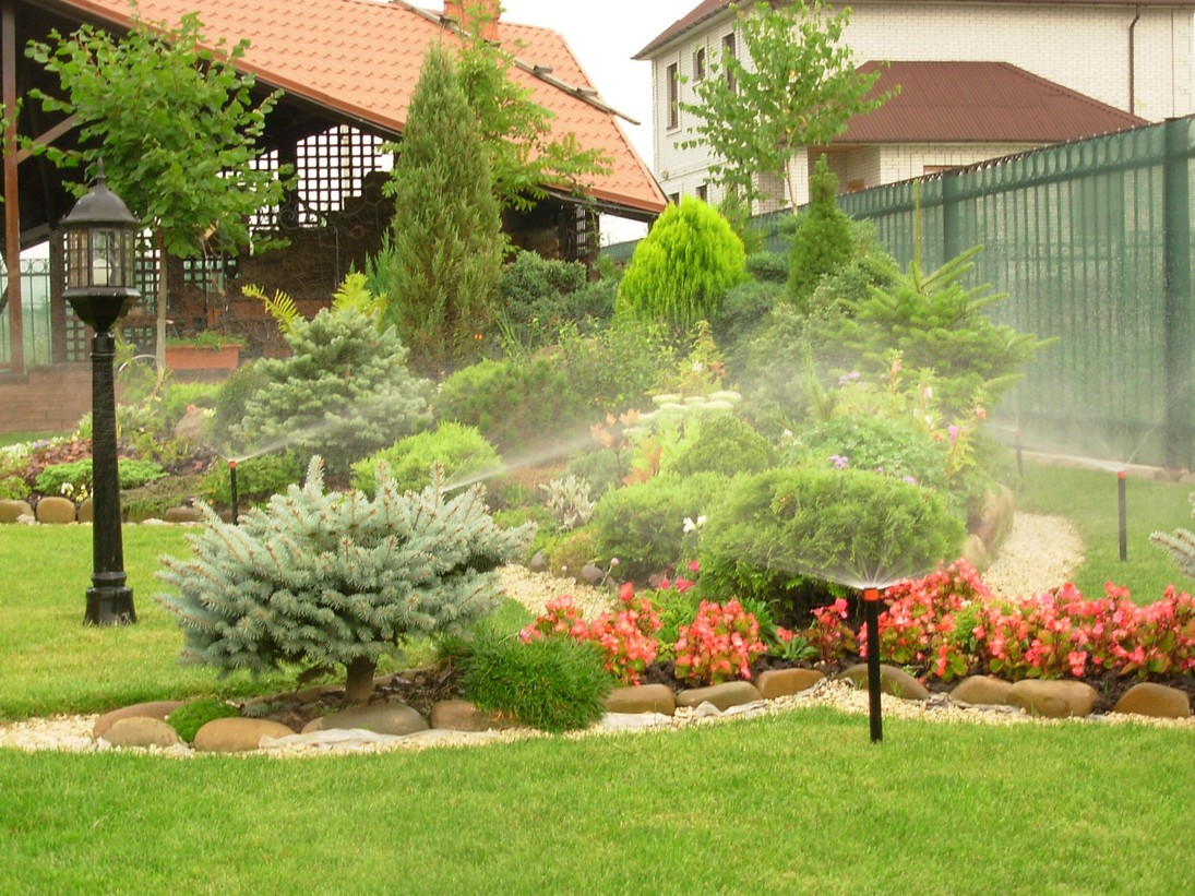Полив вечнозеленых растений