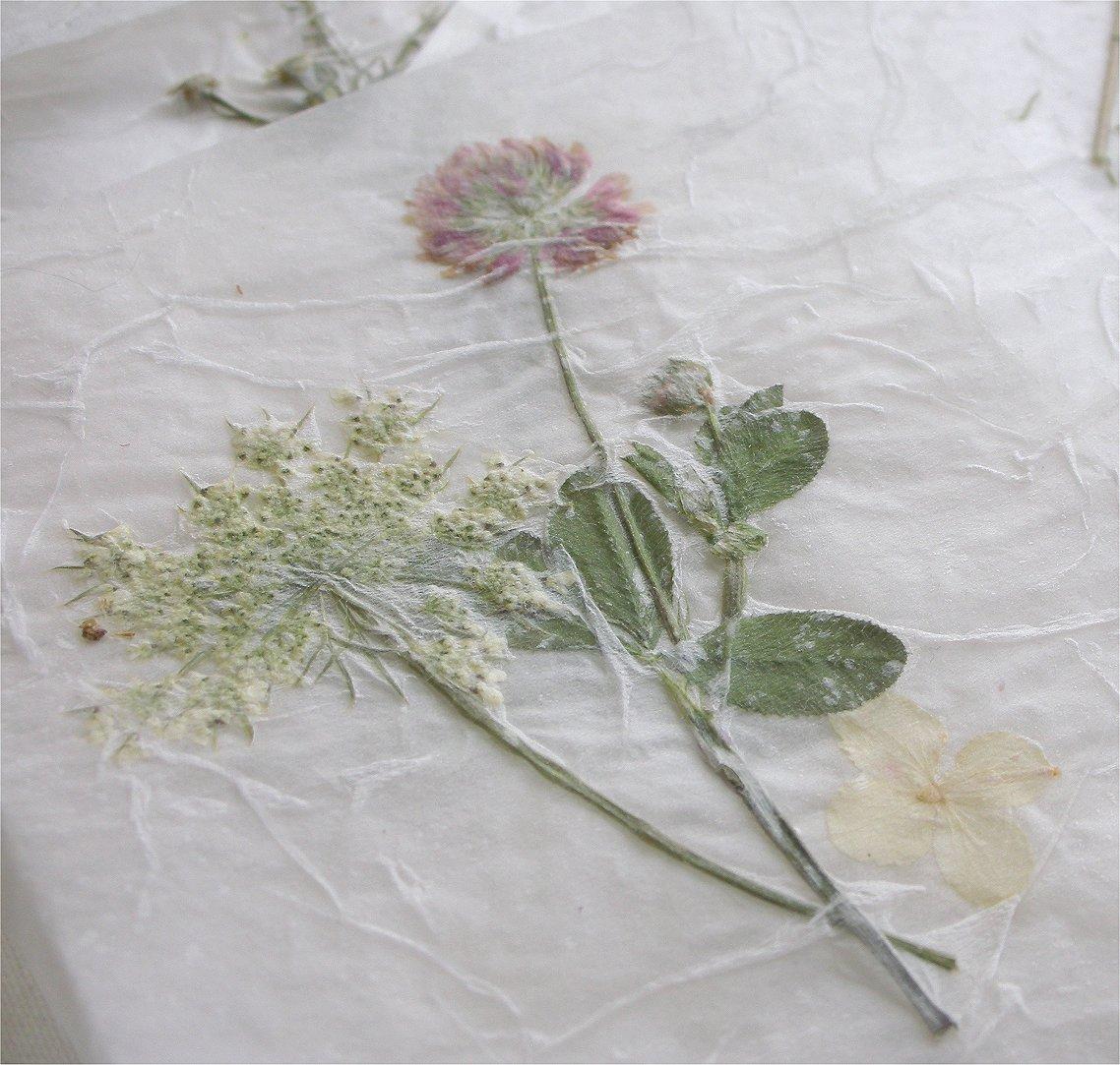 Прессовка растений для гербария