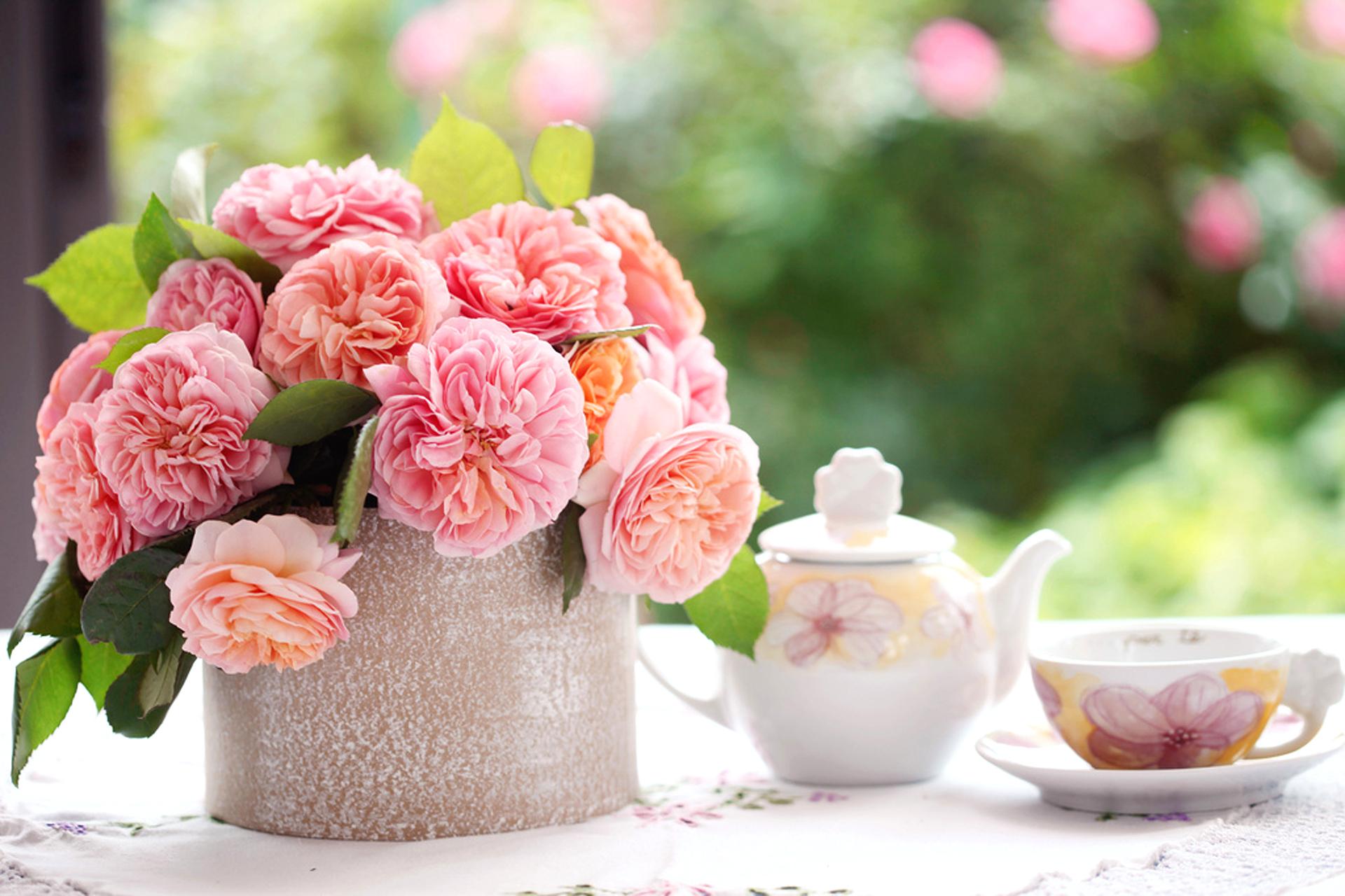 Ремонтантная роза