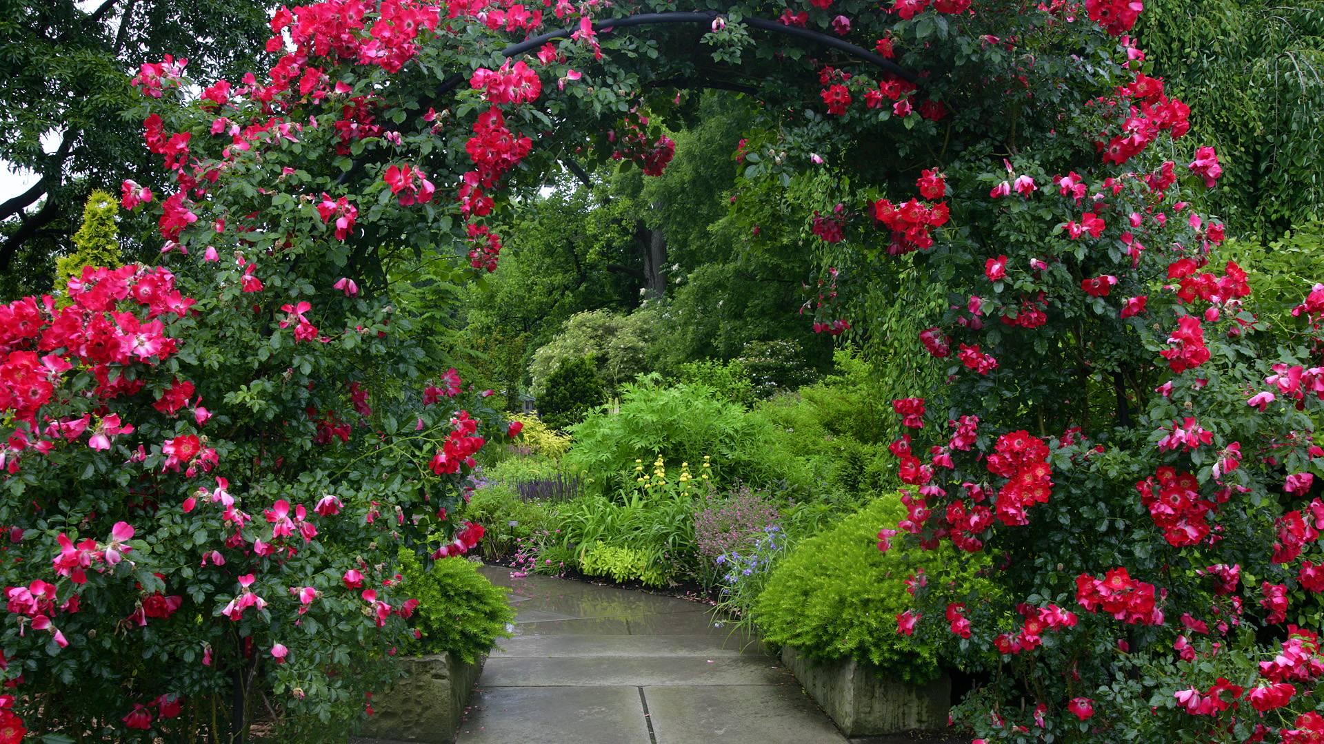 Плетистые розы в декоре сада