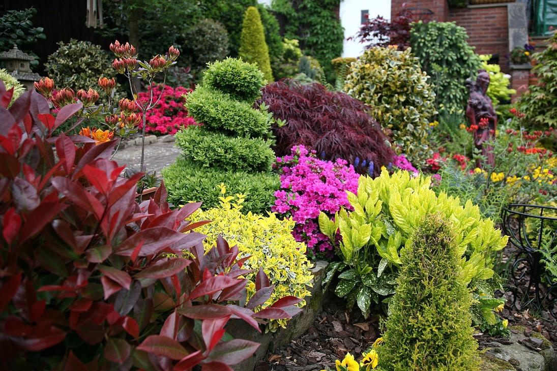 Сад из вечнозеленых растений