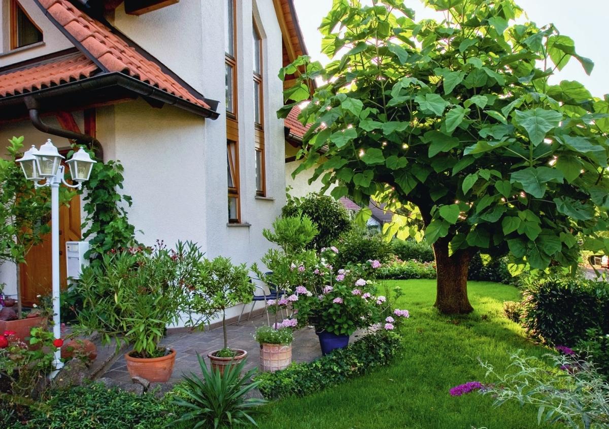 Садовые деревья