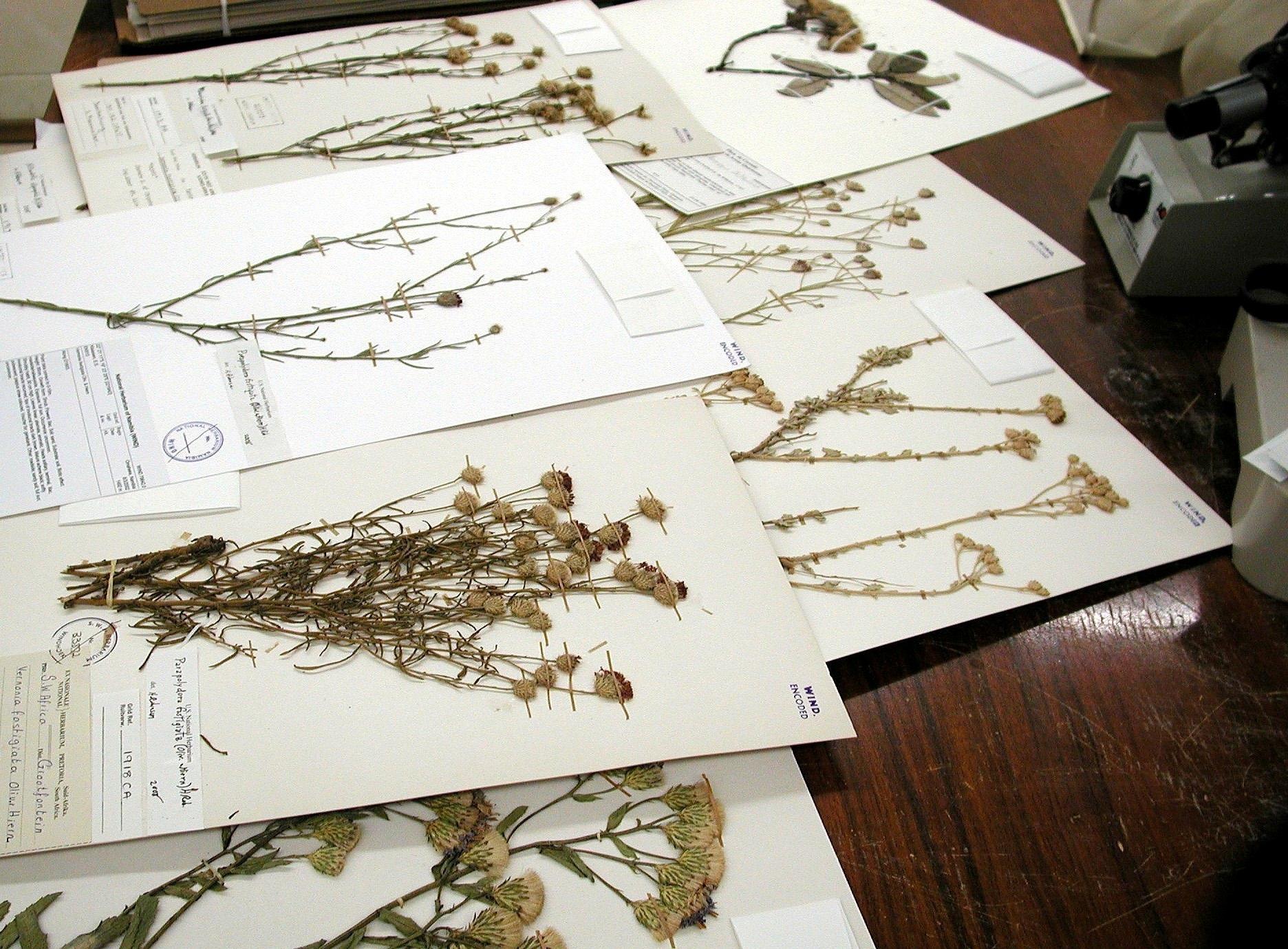 Создание гербария