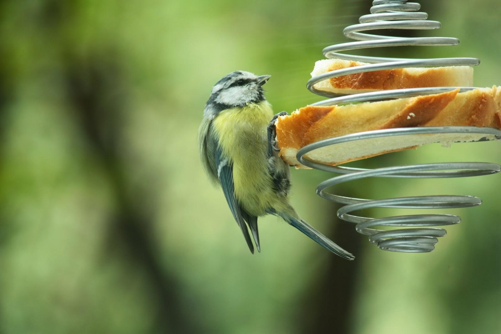 Кормушка для птиц из проволоки