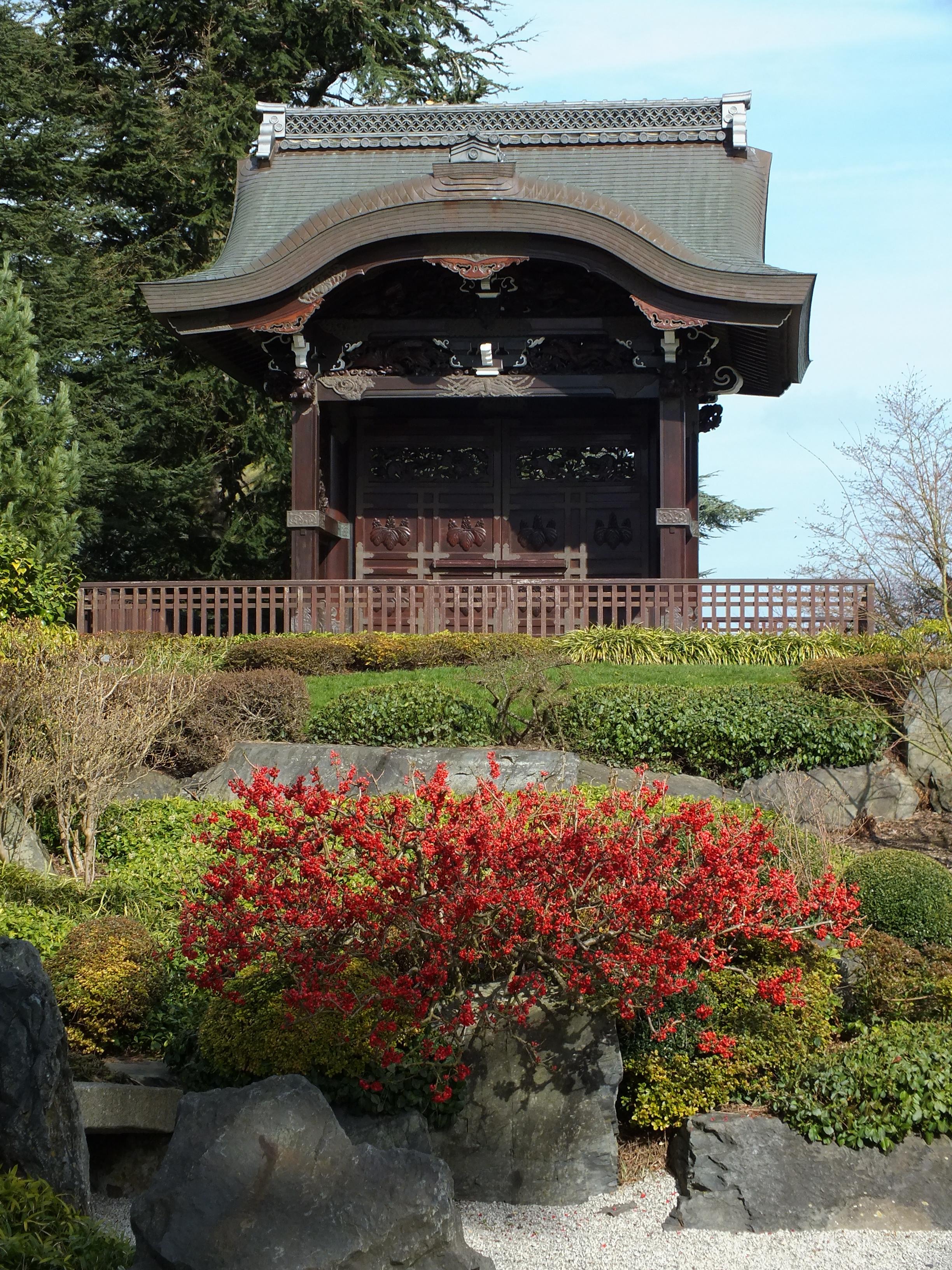 Айва в японском саду