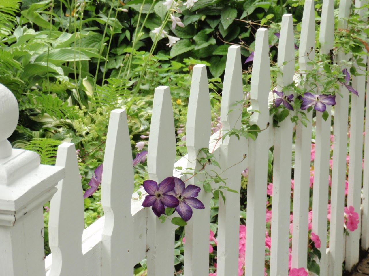 Изгородь из белого штакетника