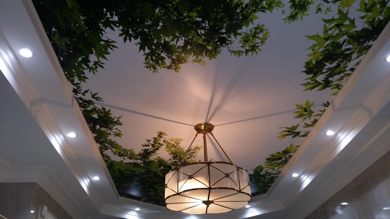 Натяжной потолок с фотопечатью деревьев