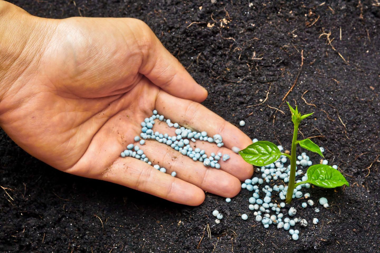 Подкормка комнатных растений натуральным удобрением