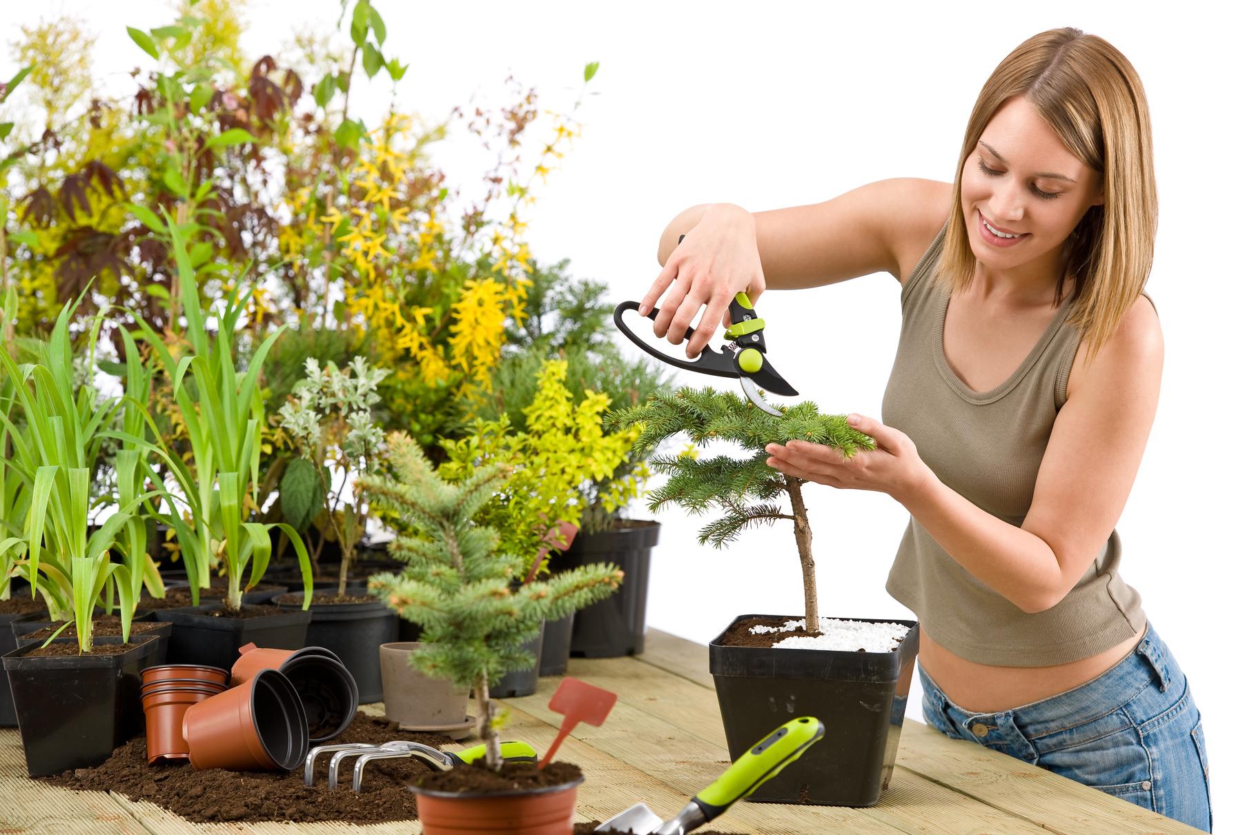Органическое удобрение для комнатных растений